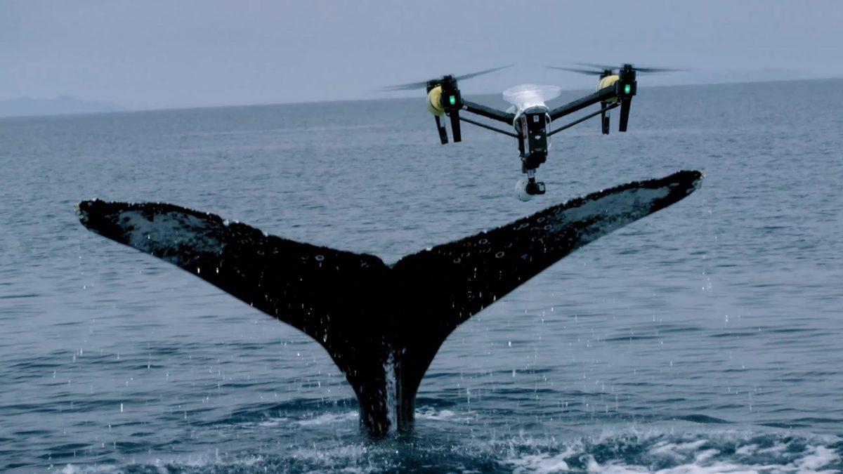 鯨調査のフロンティアを広げるSnotbotとは!?