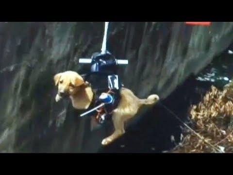 救助+ドローンの活用事例:排水溝に落ちた子犬をドローンで救出!