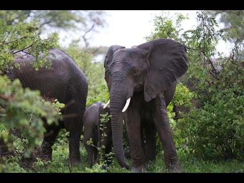 ドローンは象と共存の橋渡しとなるか?非営利団体が行なう策がお見事!